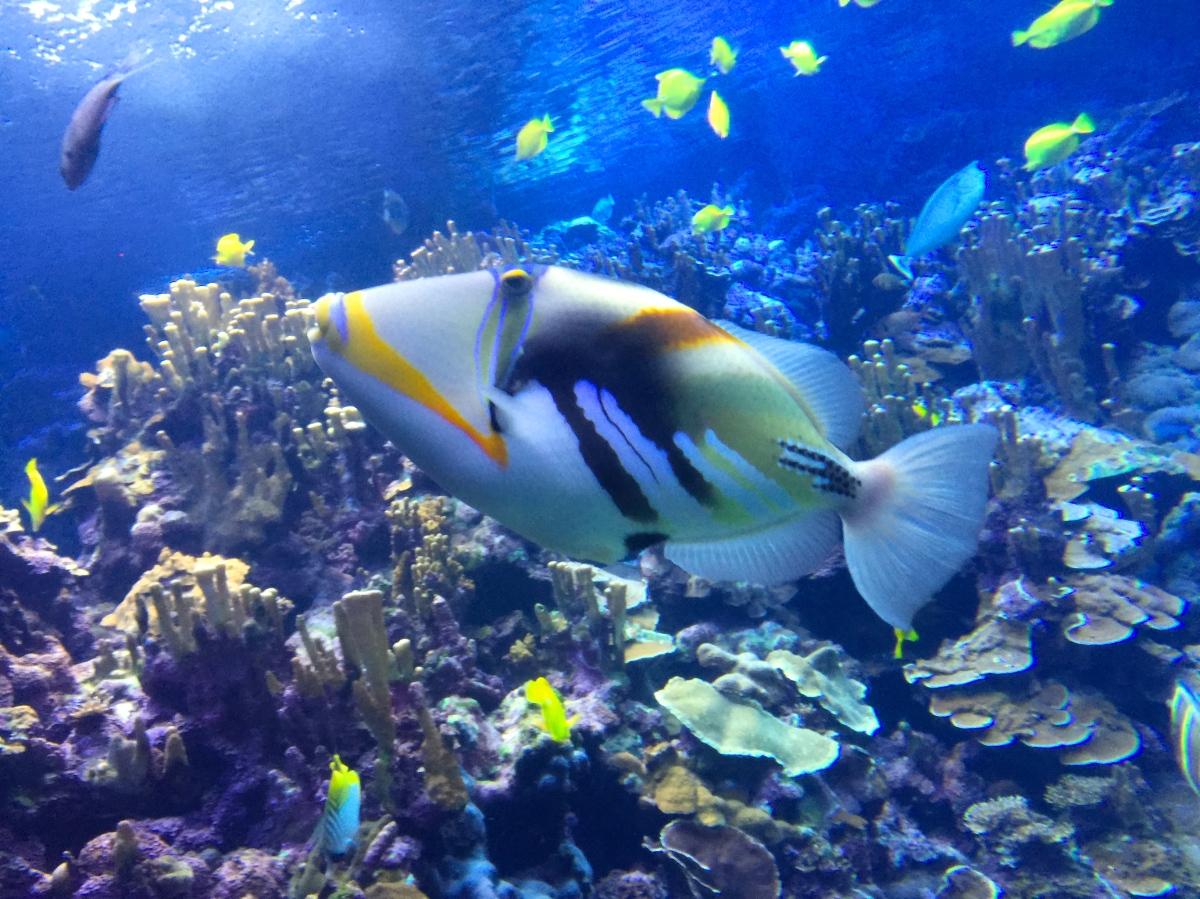フムフムヌクヌクアプアア・・・長い名前の魚
